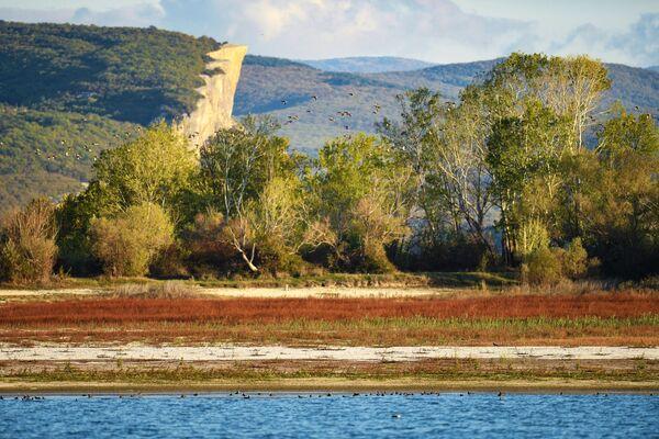 Деревья на берегу Бахчисарайского водохранилища в Крыму