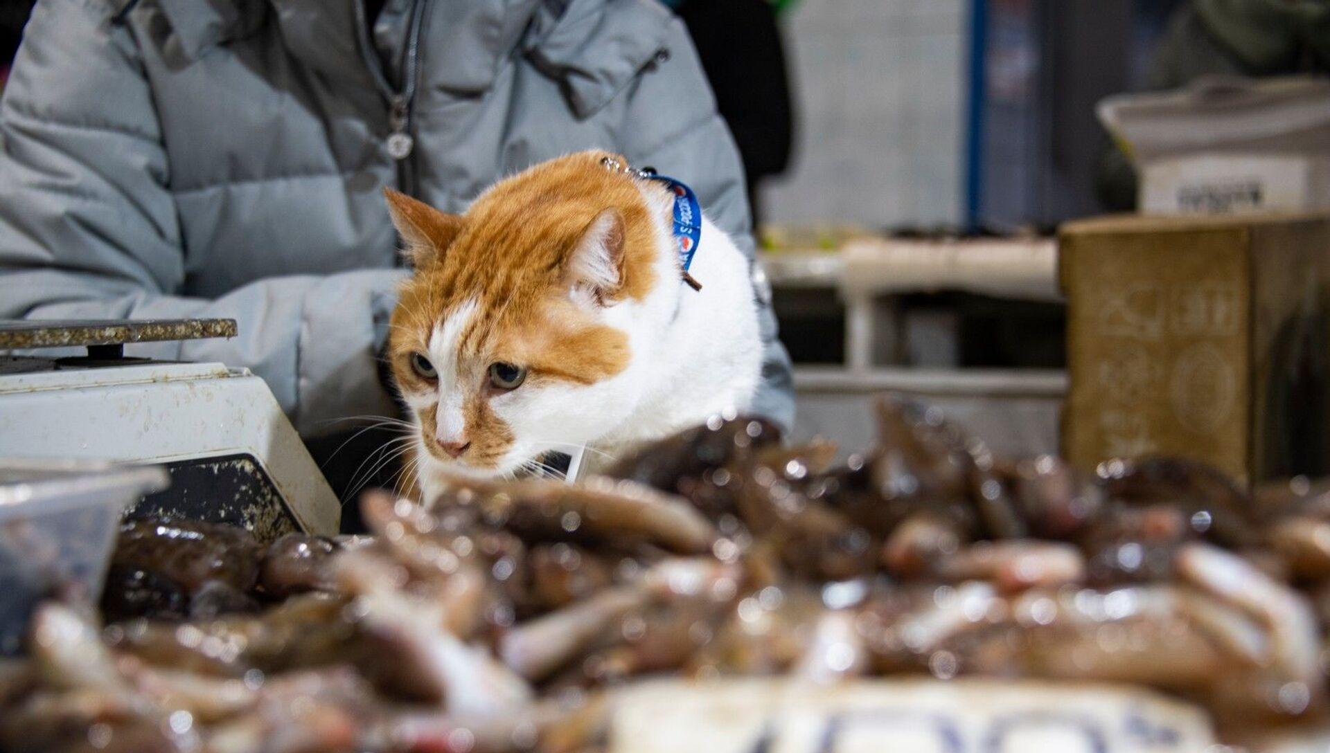 Кот Мостик проверяет рыбный рынок Керчи. - РИА Новости, 1920, 26.11.2020
