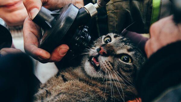 Севастопольские пожарные спасли 12 человек и трех котов