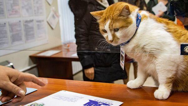 Кот мостик получил на почте письмо из Москвы