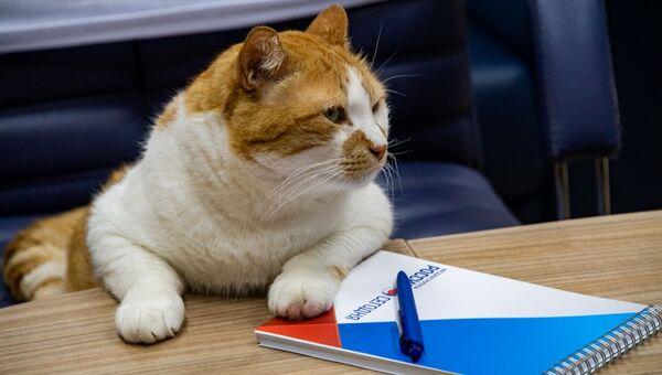 Кот Мостик, редактор котоновостей