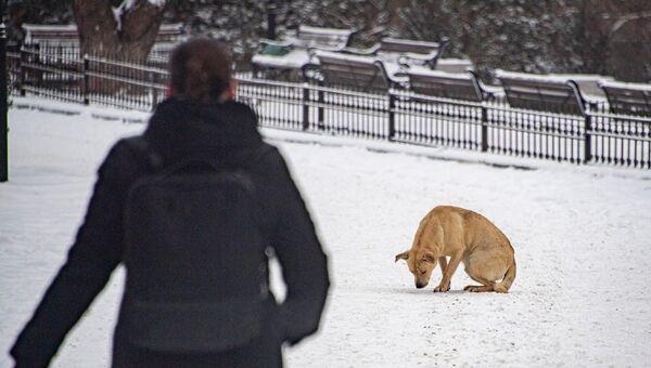 Беспризорная собака в Симферополе