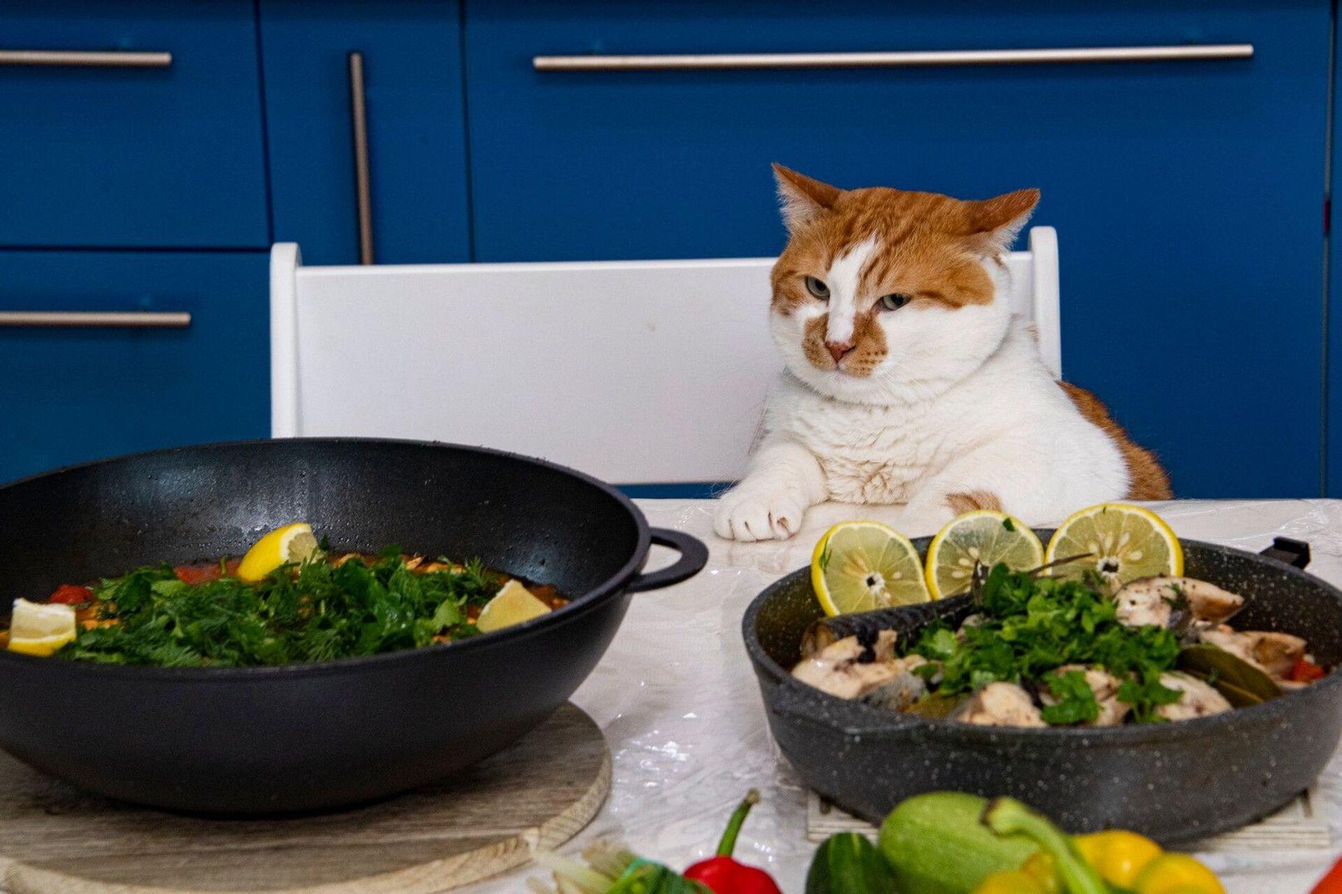 Рыбный день: два рецепта от крымских татар для кота Мостика - РИА Новости, 1920, 23.02.2021
