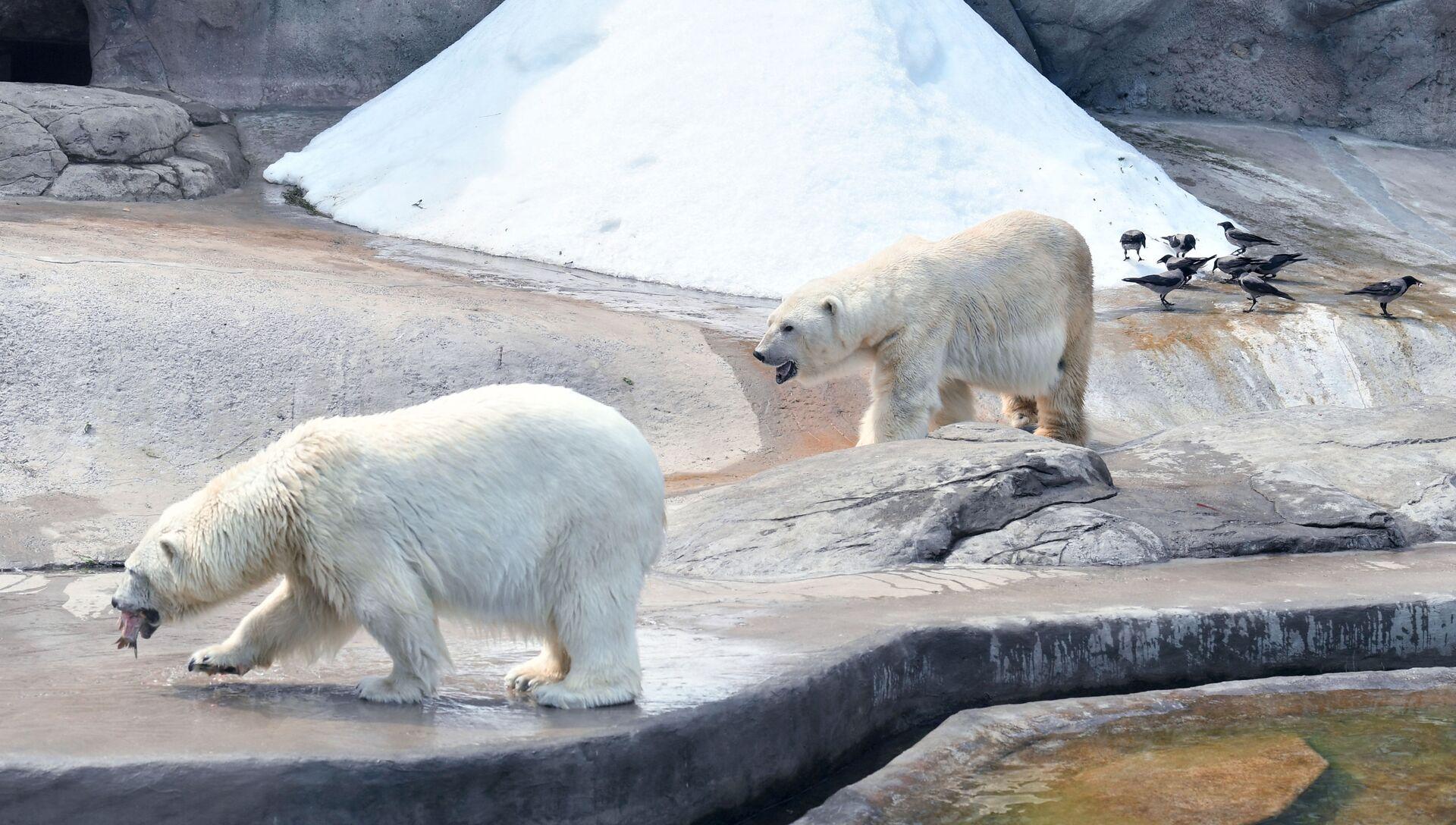 Московский зоопарк - РИА Новости, 1920, 27.02.2021