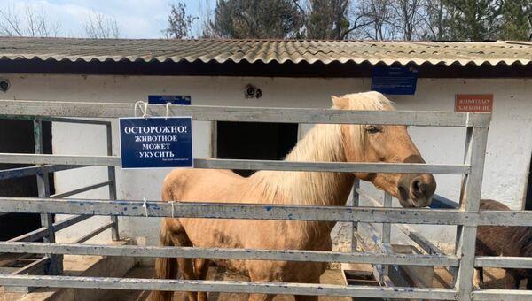 Лошадь в Симферопольском зооуголке