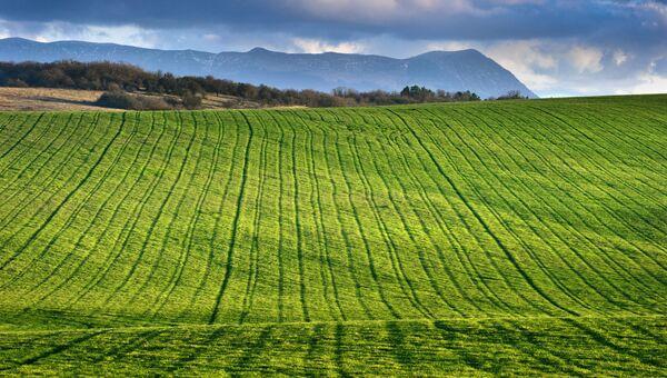 Озимое поле в окрестностях села Константиновка Симферопольского района Крыма