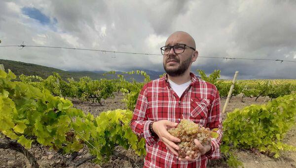 На виноградниках Алушты
