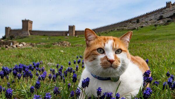 Кот Мостик в Судакской крепости