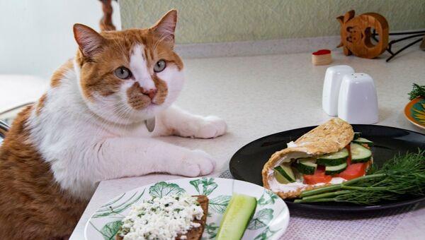 Кот Мостик приготовил блюда здоровой кухни