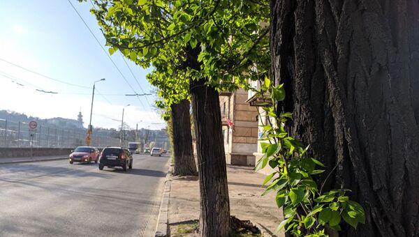 Тополя на улицах Севастополя