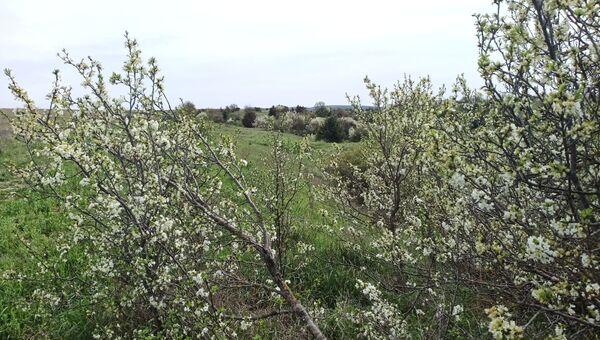 Дикие сады и луга за селом Фронтовое