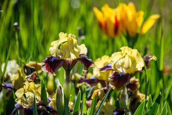 Ботсад КФУ весной