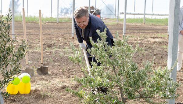 Министр сажает оливковое дерево