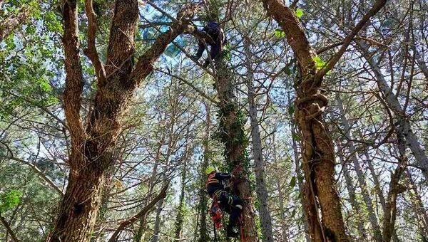 Парапланерист застрял на дереве