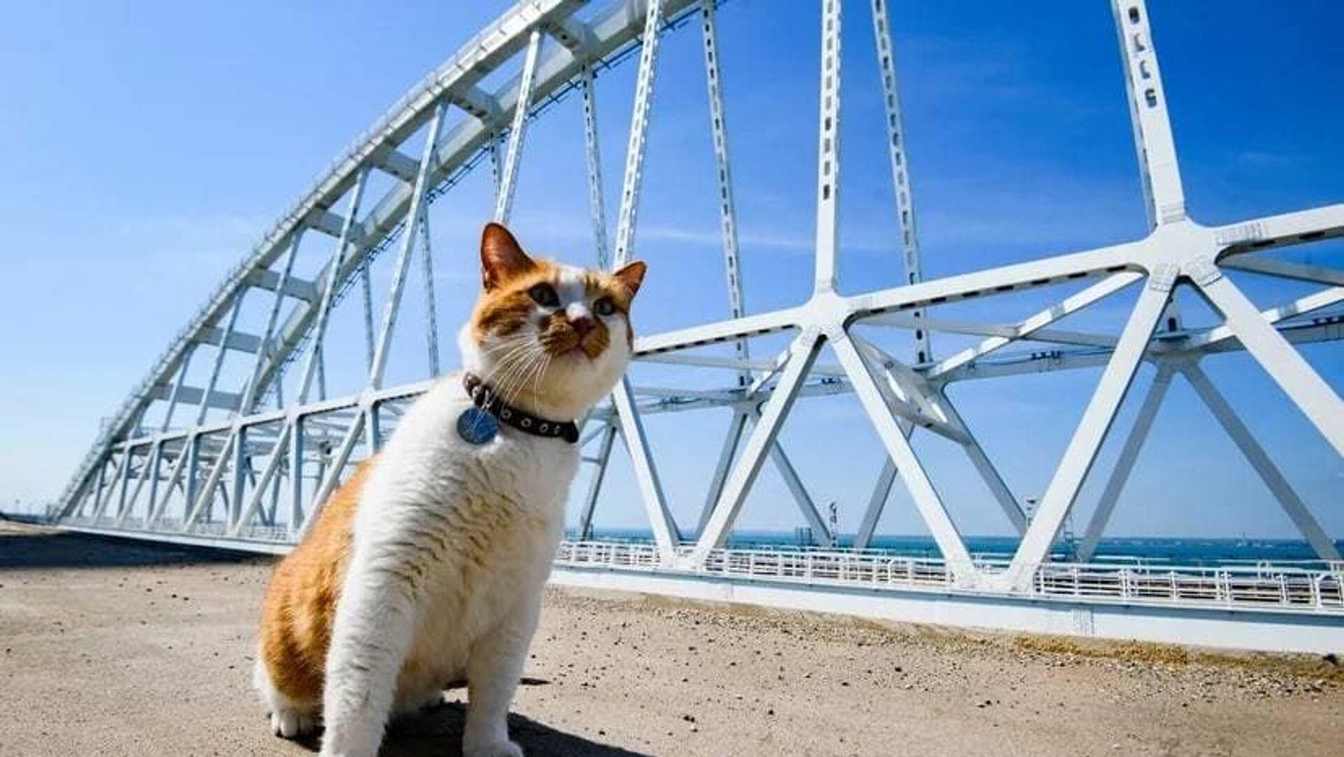 Видео_кот мостик на Крымском мосту - РИА Новости, 1920, 15.05.2021