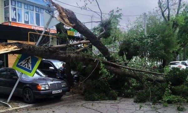 ветер в Симферополе повалил деревья