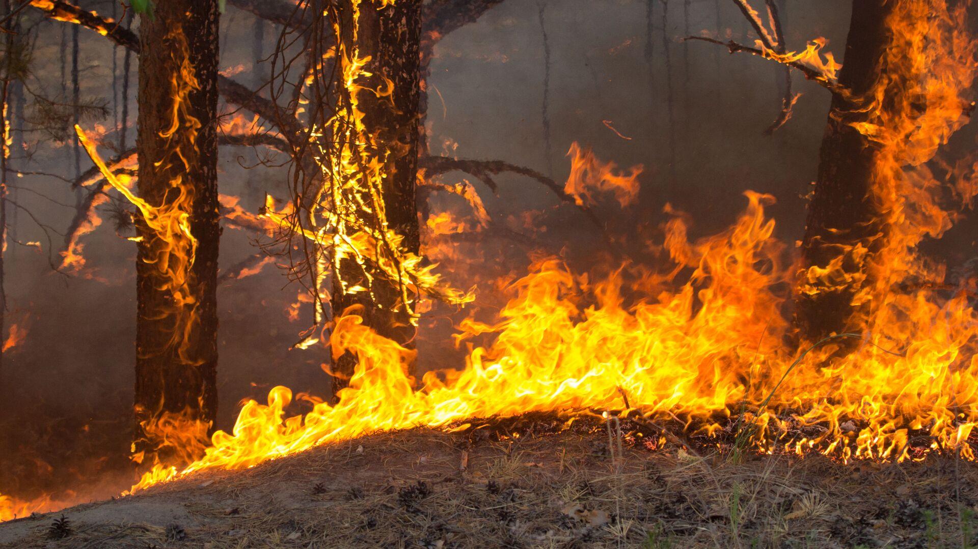Лесной пожар - РИА Новости, 1920, 23.09.2021