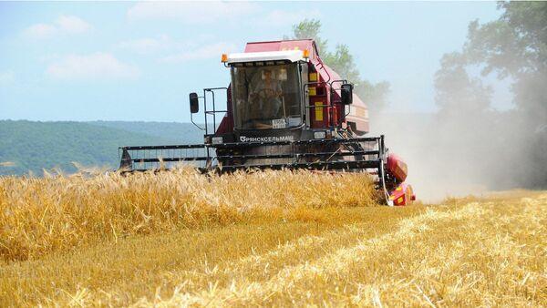 Беспилотный комбайн во время уборки зерновых