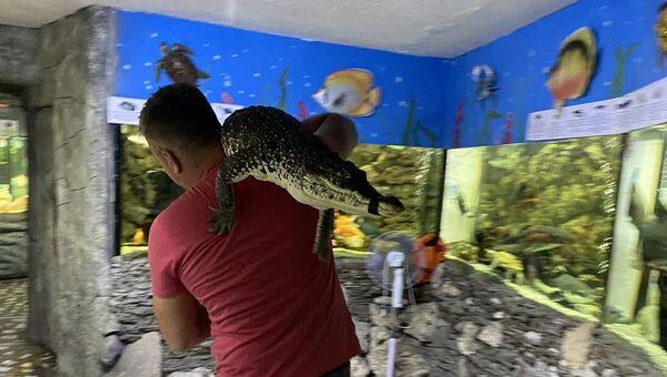 Виктор Жиленко переносит спасенного из затопленного помещения в Ялте крокодила в Алуштинский аквариум