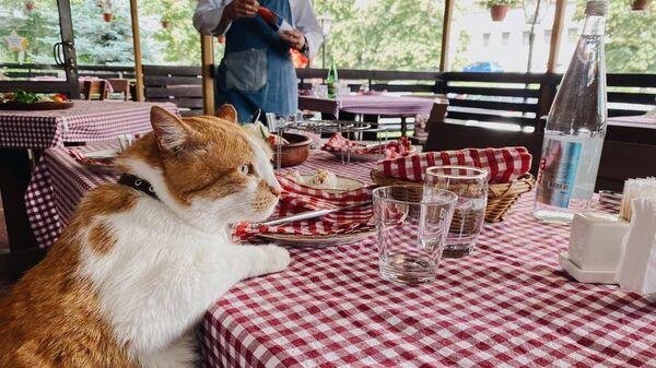 Кот Мостик учится готовить у шефа мирового класса Зорана Вельковича