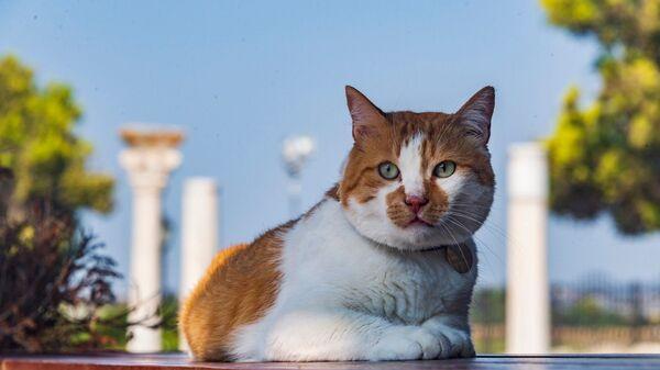 Кот Мостик в Херсонесе