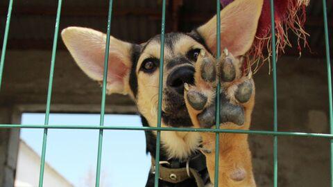 Бездомные собаки Севастополя в закрытом приюте на Монастырском шоссе