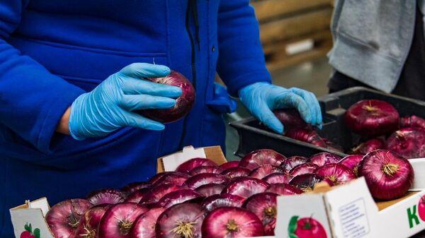 Сортировка и упаковка ялтинского лука