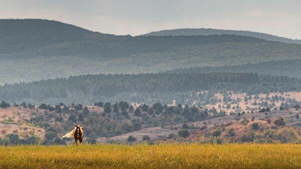 Лошадь пасется в предгорьях Белогорского района