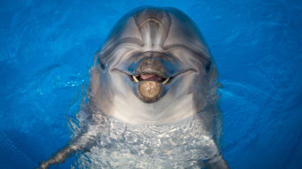 Дельфинарий в Севастополе