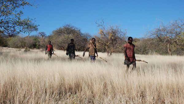 Охотники хадза вышли на дело