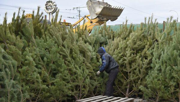 Продажа елок в Крыму