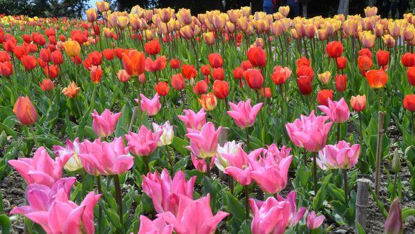Парад тюльпанов в Никитском саду