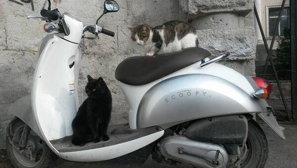 Коты на мопеде в Балаклаве