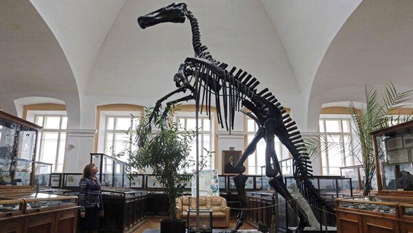 Скелет утконосого динозавра в центральном научно-исследовательском геологоразведочном музее имени академика Ф. Н. Чернышева