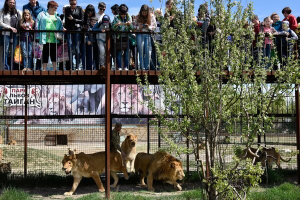 В парке львов Тайган произошел ежегодный выпуск животных в сафари