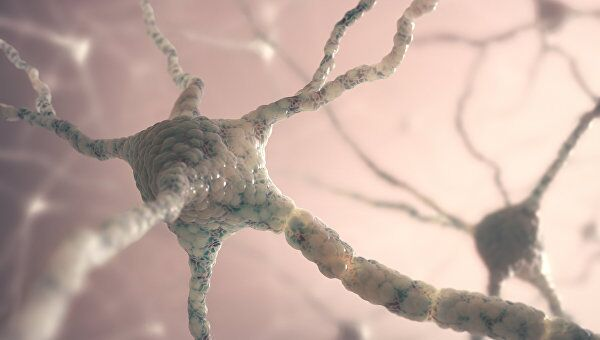 Строение нейрона головного мозга. Архивное фото