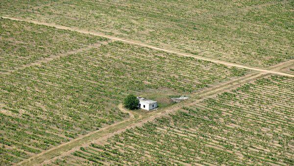 Крым с высоты птичьего полета. Виноградник