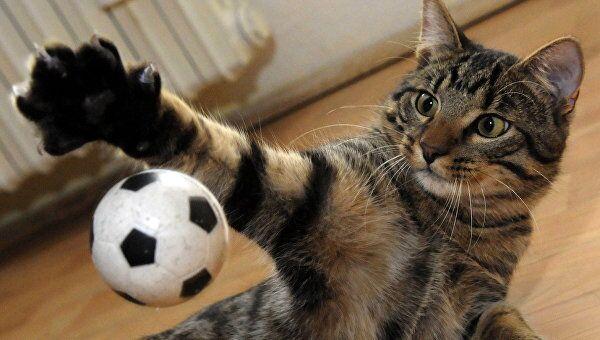 Шестимесячный котенок играет с футбольным мячиком