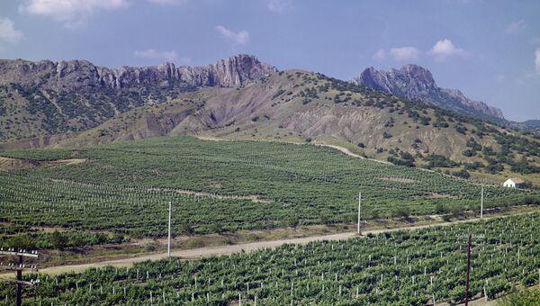 Виноградники близ Судака