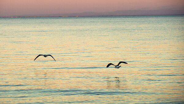 Чайки над морем. Архивное фото