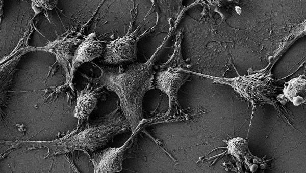 Клетки мышей, которые ученые защитили от радиации при помощи наночастиц