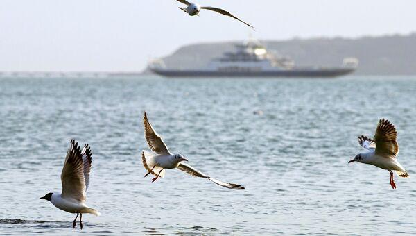 Чайки в Керченском проливе