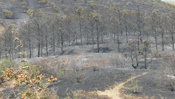 Выгоревшая лесная подстилка в районе села Громовка под Судаком