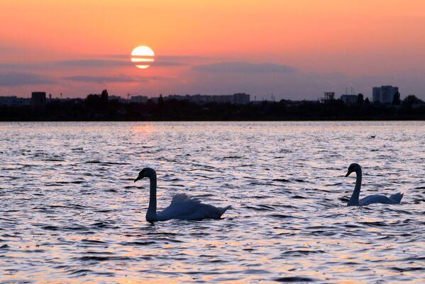 Лебеди в бухте Евпатории