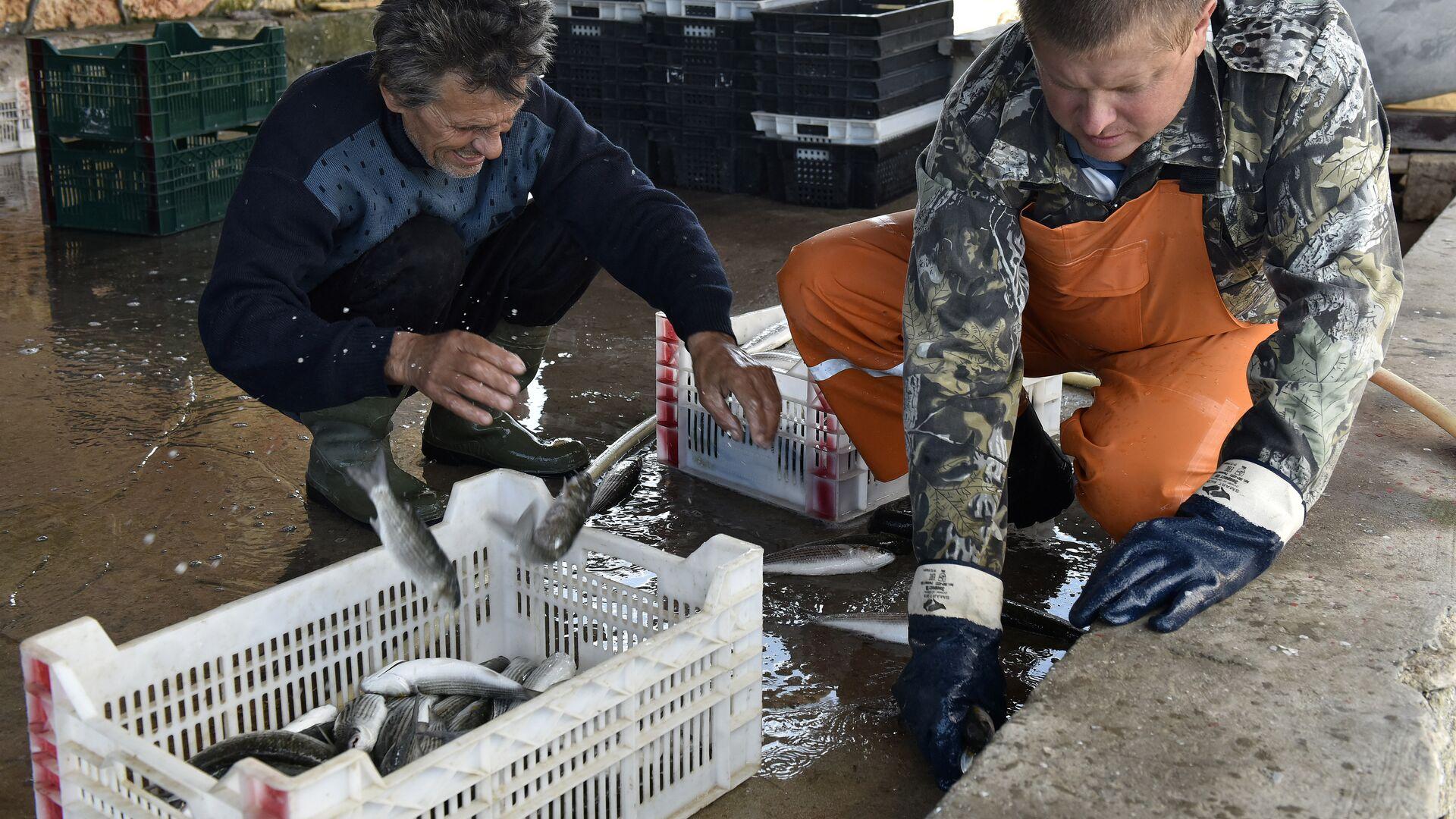 Рыбаки сортируют пойманную кефаль-лобана по ящикам - РИА Новости, 1920, 17.08.2021