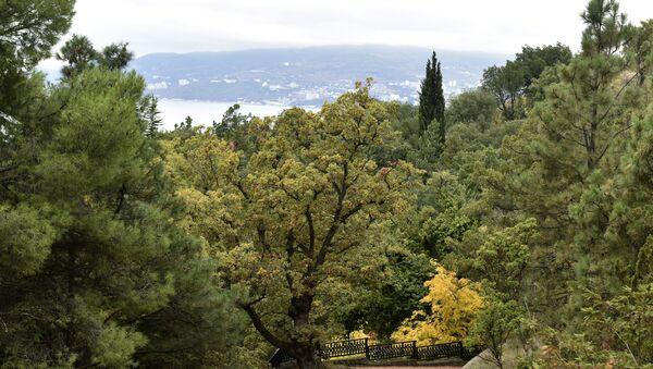 Осень в Крыму. На фото: парк Монтедор в Никитском ботаническом саду