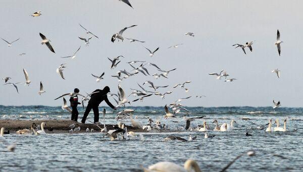 Птицы в бухте Омега в Севастополе