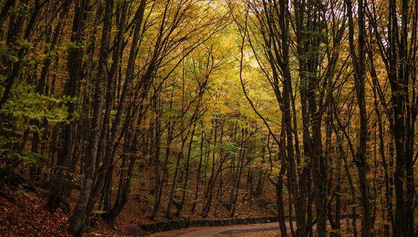 Осенний лес на горе Ай-Петри