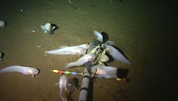 Скриншот с видео в YouTube ученые сняли на видео рыбу марианский морской слизень