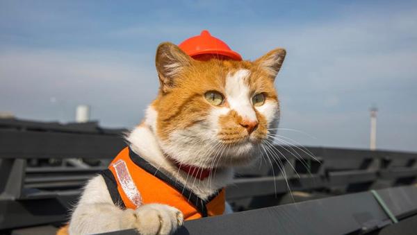 Кот Мостик на стройке Крымского моста. Архивное фото
